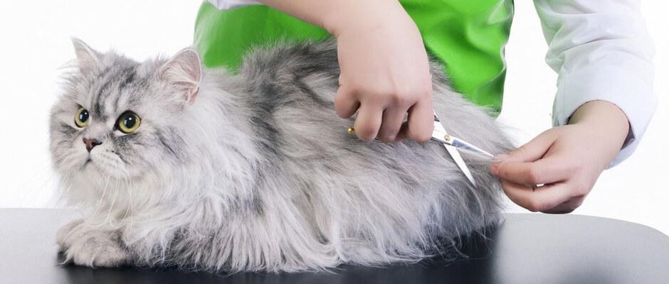 7 Cara untuk Merawat Kucing Peliharaan Supaya Tetap Sehat